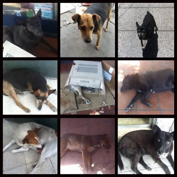 Perros de Burzaco.