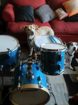Sofi, Coli y la batería nueva Sonor Martini.